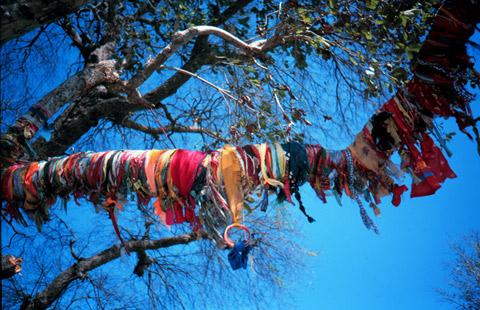 tree-worship.jpg