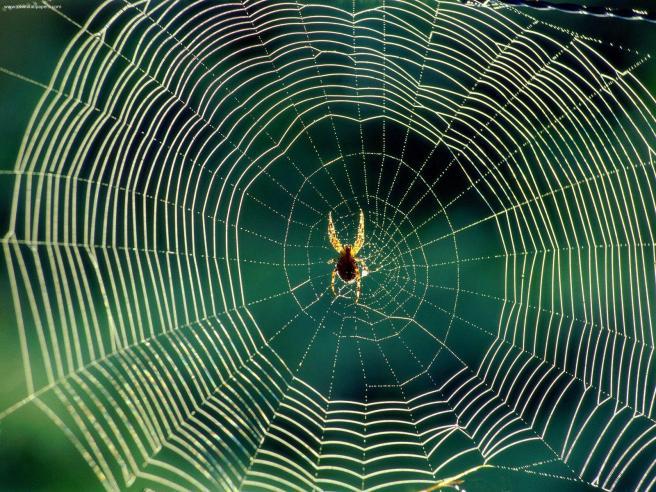 spider4.jpg